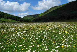 Hay meadow in the Westmorland Borrowdale