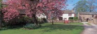 Cherry tree full of blossom at Dacre village