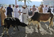The cattle market at Nizwa