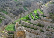 Crop terraces in Oman
