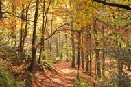 Sunlit autumn woodland